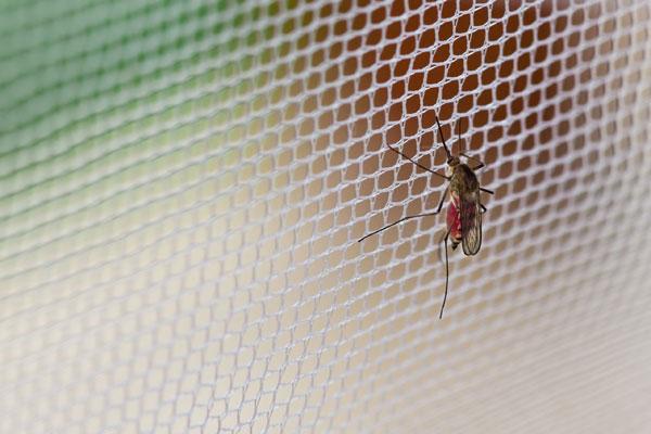 Poradnik - moskitiery